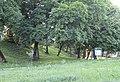 Острозький парк перед негодою.jpg