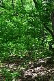 Парк Берёзовая роща в Киеве. Фото 30.jpg