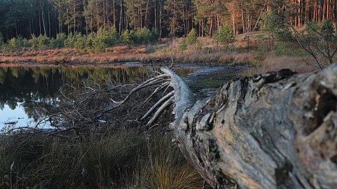 Повалене дерево.jpg