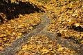 Ручей в Винновской роще.jpg