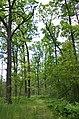 Сосново-дубові насадження, Пісківка 06.jpg