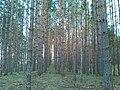 Сплав - panoramio (9).jpg