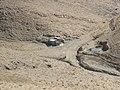 پناهگاه چنار 02 - panoramio.jpg