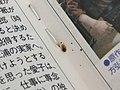 トコジラミ 雑誌.JPG