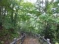 成田東公園の遊歩道 - panoramio.jpg