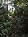 磨里水库至北岭登山道 - Trail Connecting Moli Reservoir and Beiling Mountain - 2014.07 - panoramio.jpg