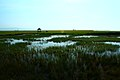 若尔盖花湖-错热洼坚Cuorewajian Lake - panoramio.jpg