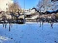 雪后的潍坊学院 2020-12-30 17.jpg