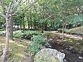 鶴ヶ島市運動公園 自然観察の森.jpg
