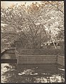 -Garden with Cherry Trees in Bloom, Pool- MET DP136239.jpg