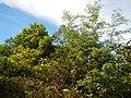 01334jfCapalangan Road Sulipan Apalit Pampanga Peters Shrines Calumpitfvf 04.JPG