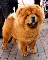 Chow Chow Dog Food Review