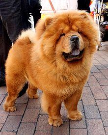 Foo Dog Wikipedia