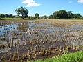 09676jfLandscapes Grasslands Plaridel Bypass Road Bonga Menor Bustos Bulacan Villagesfvf 21.JPG