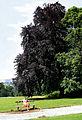 0 Uccle - Parc du Wolvendael (1).JPG