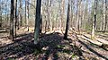 13 Grabhügelgruppe im Waldstück Hainbach.jpg