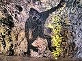 """14-מערת הפלמח משמר העמק צילום מתי חלילי (12) הילדים קראו למערה """"מערת הקוף"""".jpg"""