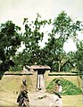 1907年9月8日宁阳一个果农家里的果树 (上色版).jpg
