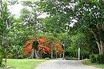 2008-07-17 St. George Village Botanical Gardens St. Croix USVI.jpg