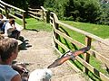 2008 07 15 Bird Care Centre of Castel Tyrol 60745 D9768.jpg