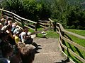 2008 07 15 Bird Care Centre of Castel Tyrol 60760 D9771.jpg