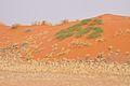 2010-09-26 09-43-30 Namibia Hardap Hammerstein.JPG