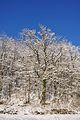 2010-12-26 15-18-34 Switzerland Schaffhausen Dörflingen, Hinterdorf.JPG