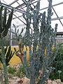 20120304 Tuin van Kina (0018).jpg