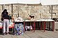 2014-P38 Porto (15522617597).jpg