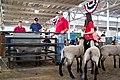 2014 Iowa State Fair (14693246440).jpg
