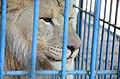 2019-08-10. Зоопарк в Придорожном 055.jpg