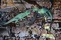 2019. Крокодиловый каньон в Ейске 085.jpg