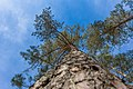 2019 Baum bei Ungelstetten 07.jpg