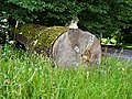 2020-07-18 Eiche am Schloss Oesterholz, Schlangen, NRW.jpg