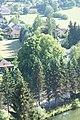 2 Sommerlinden (Kirchberg an der Pielach) 005.JPG