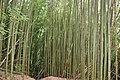 313, Taiwan, 新竹縣尖石鄉秀巒村 - panoramio (15).jpg
