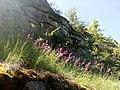 35-211-5004 Казавчинські скелі Лютинська 22.jpg