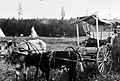 441 Oxen and wagon, Old Oregon Trail Days 1921 (36209092175).jpg