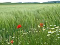 8 Feldblumen.jpg