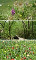 A-special-composite-of-plants.jpg