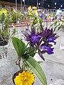 APOC 12 - orchid exibition in Bangkok (2016) (27374858961).jpg