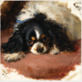 A King Charles Spaniel .PNG