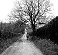 A Surrey bridleway - geograph.org.uk - 691448.jpg