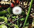 A Tiny Flower.jpg