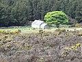 A former farmstead on the edge of Annalong Wood - geograph.org.uk - 2420937.jpg