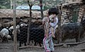 A girl with Sheep.jpg