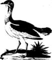 A natural history of birds Fleuron T144870-12.png