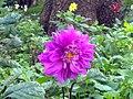 A scene of botanical garden Ooty7.jpg