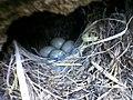 A special bird's nest.jpg