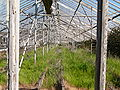 Abandoned greenhouses 2.jpg
